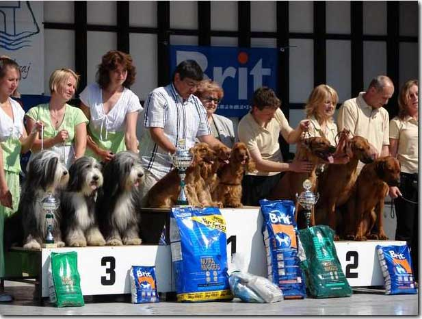 "Great weekend for us again. CACIB Litomerice on 19th of May under Mr H. Klemann - Germany. My Cowboy, Eric and Francis as a golden team won ,""Best Breeding Group"",  (8 entries) on Saturday.      Foto V. Procházka"