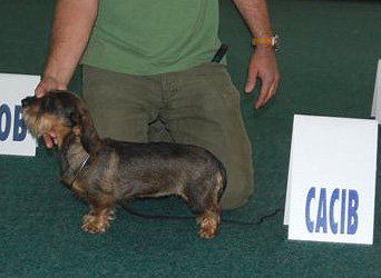 Beyonce Bell z Vejminku - Exc. I., CAC, CACIB, Crufts Qualification (Mr F. Mijo - CRO)