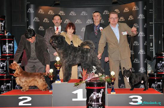CACIB Brno 7.2.2010 -Best In Group Junior and res. Junior Best In Show under Mr M. Vaclavik