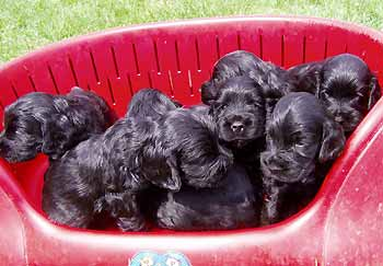V - litter at the age of four weeks.